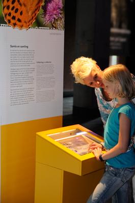 Blivande samlare får inspiration på Naturhistoriska riksmuseet. Foto: Annica Roos