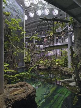 """California Academy of Science öppnades 2008 och har snabbt blivit världsberömt bland annat för sin """"helt gröna, ekologiskt hållbara"""" byggnad ritad av Renzo Piano. Kupolens yttertak är en odlingplats."""