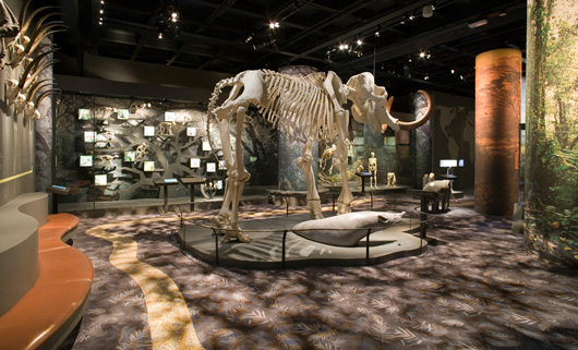 Översikt över utställningen, mammut i förgrunden, människan i bakgrunden.