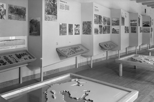 Folkskollärarens utställning kallade Eva denna didaktiska stenåldersutställning som öppnade på Historiska museet 1943. Yxhuvudena, pilarna, skinnskraporna och metkrokarna har fått sällskap av kartor, fotografier, teckningar och texter som förklarar föremålens ekologiska och funktionella sammanhang. Foto: Historiska museet